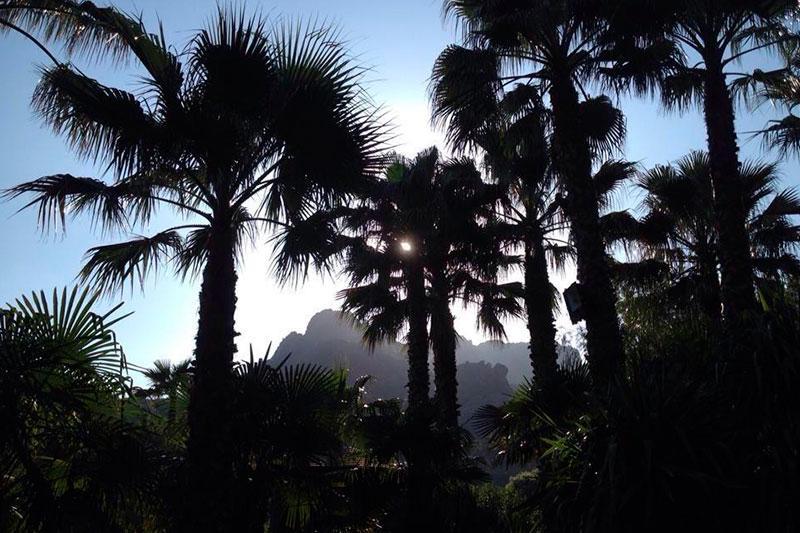 evenement-roquebrune-palmier
