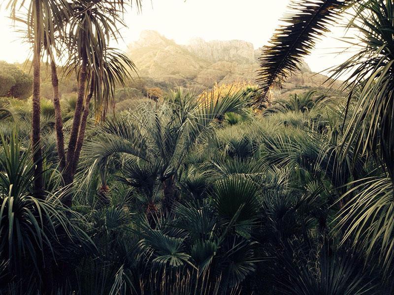 rocher-jungle